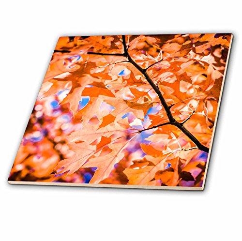 Oak Leaf Tile (3dRose Alexis Photography - Seasons Autumn 2 - Beautiful pale orange leaves of a red oak tree in autumn - 8 Inch Glass Tile (ct_272283_7))