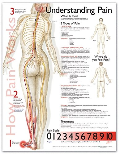 Understanding Pain Anatomical Chart Anatomical Chart Co U.S. 9781587799839 ANF: Health and Wellbeing Anatomy Clinical Medicine: Professional Education & Training Family & General Practice General Adult HUMAN ANATOMY Industrial or vocational training MEDICA