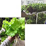 WEPLANT Hydroponic Growing System NFT with Timer
