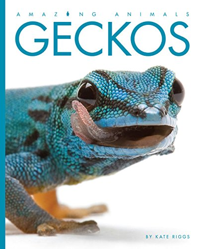 Amazing Animals: Geckos