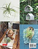 Living with Air Plants: A Beginner's Guide to