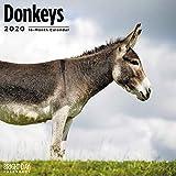 2020 Donkeys Calendar 16 Month 12 x 12 Wall Calendar by Bright Day Calendars (Farm Animals Wall Calendar)