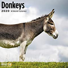 2020 Donkeys Calendar! Donkeys are one of the most notoriously reliable farm about helper animals. In fact, they had been used by humans for everything from load-bearing to canal operating for the last 5000 years! Yes, these hard workers hold...