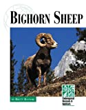 Bighorn Sheep, Brett Bannor, 1560068876