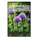 Sow Right Seeds - Herb Garden Seed Collection
