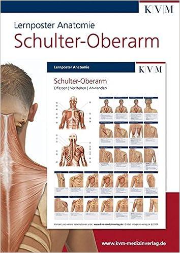 Lernposter Anatomie: Region Schulter - Oberarm Die Muskelbuch-Reihe ...