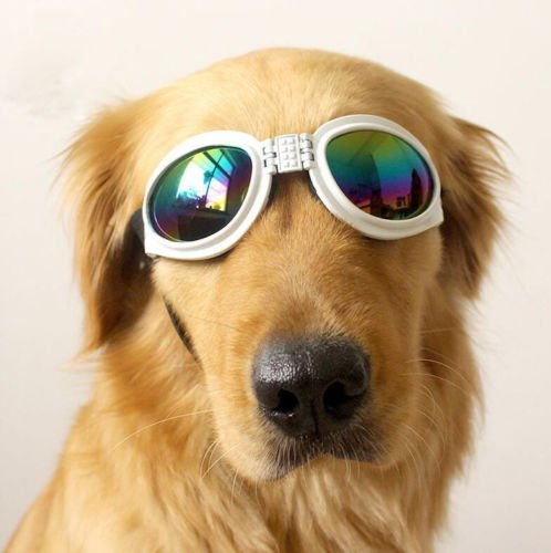 XENO-Pet Dog Goggles UV Sunglasses Sun Glasses Glasses Eye Wear - Online Calcutta In Style Shopping