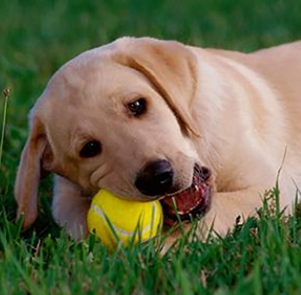Pet Dog Playing Balls URBEST 12 Pack Advanced Training Tennis Balls Practice Balls for Novice