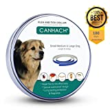Dog Flea Treatment Collar - Flea Collar for Cats & Dogs Hypoallergenic waterproof adjustable 180 days protection from many species of insects. Enhanced with Natural essential oil S,M,L Dogs
