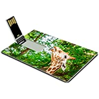 Luxlady 32GB USB Flash Drive 2.0 Memory Stick Credit Card Size A cute giraffe Fossil Rim Wildlife Center Glen Rose Texas USA IMAGE 20700954