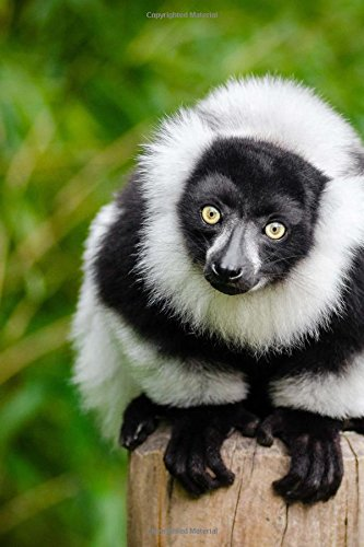 Read Online Hello Black and White Lemur Cute Animal Journal: 150 Page Lined Notebook/Diary pdf