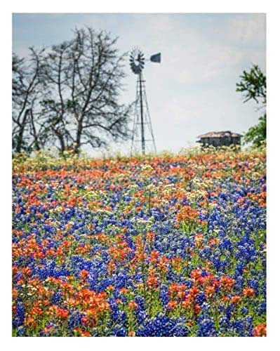 Amazon Com Texas Bluebonnets And Indian Paintbrush Wildflowers 11x14 Unframed Photo Wall Art Print Decor Gift For Texans Or Anyone Who Loves Flowers Home Dorm Or Bedroom Poster Decor