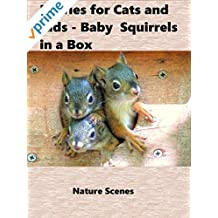 Movies for Cats and Kids - Baby Squirrels in a Box