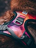 Embark Urban Dog Harness, Easy On and Off with