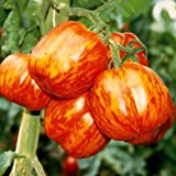 Rare Red-Yellow Tomato STRIPED STUFFER 10 or 20 Heirloom Organic Vegetable Seeds