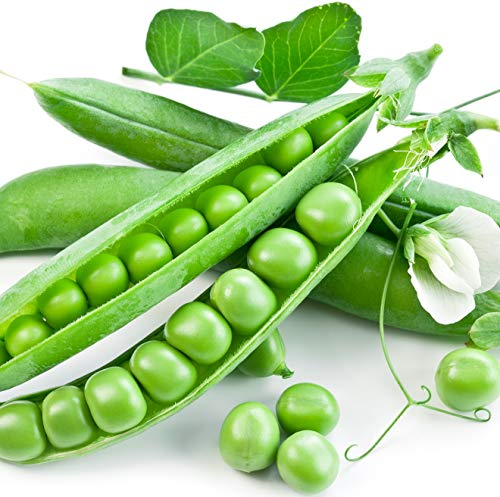 Earthcare Seeds Peas Little Marvel Sweet Dwarf Bush Pea 50 Seeds (Pisum sativum) No GMO - Open Pollinated - Heirloom