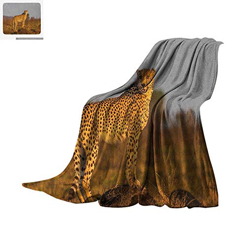 Looking for a barefoot dreams blanket cheetah? Have a look at this 2020 guide!