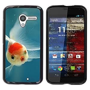 "Pulsar Snap-on Series Teléfono Carcasa Funda Case Caso para Motorola Moto X Motorola Moto X ( 1st Generation ) , Tropical Fish Buceo Naturaleza Azul"""