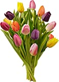 Benchmark Bouquets Multi-Colored Tulips