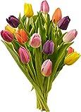 Kyпить Benchmark Bouquets Multi-Colored Tulips на Amazon.com
