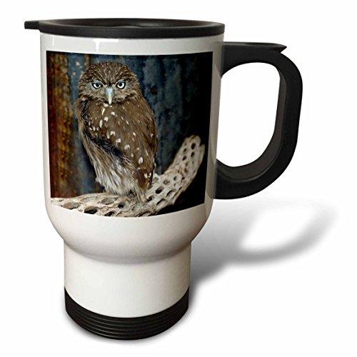 3Drose Tm 87770 1 Ferruginious Pygmy Owl Us03 Bfr0131 Bernard Friel Travel Mug  14 Ounce  Stainless Steel