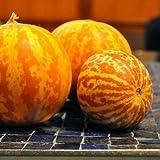 Tigger Melon (Tiger Melon) Seeds ► Rare Organic Heirloom Tigger Melon Seeds (10+ seeds) ◄ by PowerGrow Systems