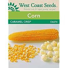 Corn Seeds - Caramel Crisp Popcorn F1