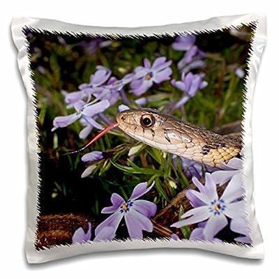 3dRose Danita Delimont - Snakes - Eastern Garter Snake in creeping phlox, Kentucky - Pillow Case