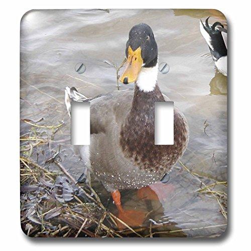 3dRose LLC lsp_50354_2 Male Mallard Duck Wet Double Toggl...
