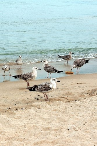 Seagulls on the Shore of the Black Sea Journal: Take Notes, Write Down Memories in this 150 Page Lined Journal PDF