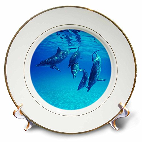 3dRose cp_39010_1 Dolphins Underwater Porcelain Plate, 8-Inch