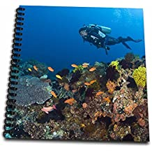 3dRose db_74813_2 Scuba Diving, Apo Island, Philippines-As29 Sws0139-Stuart Westmorland-Memory Book, 12 by 12-Inch