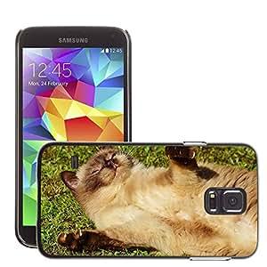 Etui Housse Coque de Protection Cover Rigide pour // M00110682 Gato británico de Shorthair Juego Mieze // Samsung Galaxy S5 S V SV i9600 (Not Fits S5 ACTIVE)