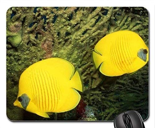Fish Themed Gaming Mouse pad,Lemon Peel Angelfish Mouse Pad, Mousepad