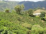 Raw Unroasted Green Coffee Beans, Arabica Coffee Beans Farm La Compañia (10 Lb)
