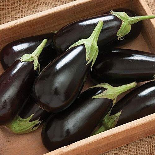 - Jaylo (F1) Eggplant Seed - Black Italian type!! - Very Prolific & Very Tasty!! (25 - Seeds)