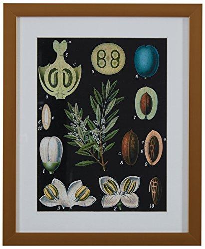 "Amazon Brand – Rivet Blue and Green Mid-Century Modern Botanical Anatomy in Gold Frame Print Wall Art, 13"" x 15"""