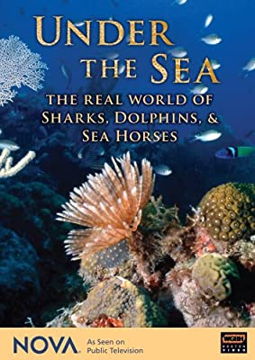 NOVA: Under the Sea - The Real World of Sharks, Dolphins, & Sea Horses