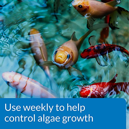 Images videos for Koi pond algae control