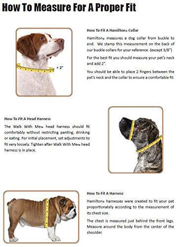 Picture of Hamilton Adjustable Nylon Dog Collar