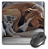 VWPics Cats and Dogs - Dog laying down by Kitten who is sitting - MousePad (mp_47165_1)