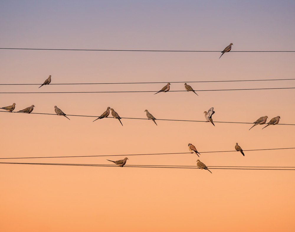 Jplo9|#Jp London MDXL1X846789 Jpl and John Fan Present Music Of Light Birds On A Wire Dusk 12 Ft Wide by 8.5 Ft High Peel and Stick Fully Removable Wall Mural Extra Large