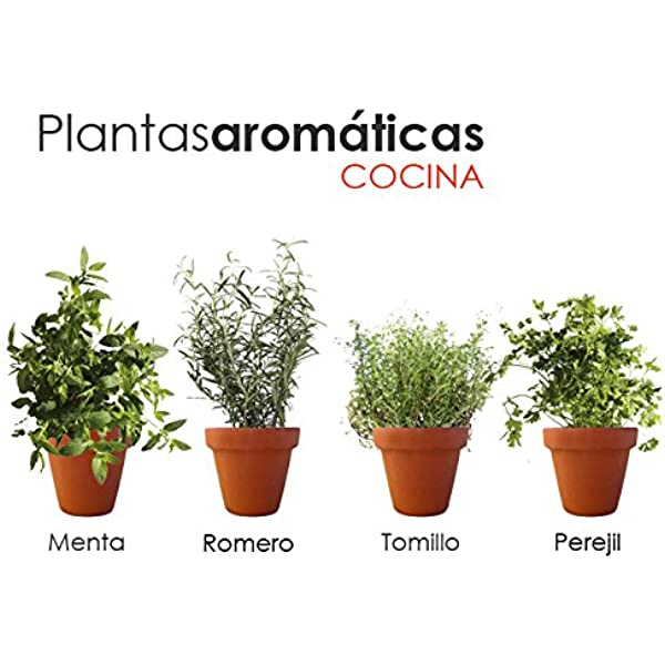 PACK PLANTAS AROMÁTICAS COCINA 2. 1 MENTA, 1 TOMILLO, 1 ROMERO, 1 ...
