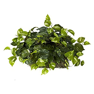Pothos Ledge Silk Plant