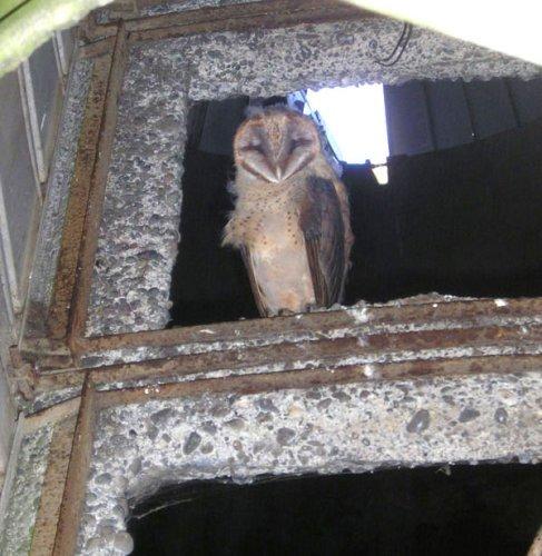 Pack of 5 with Bone Sorting Sheet Jumbo Owl Pellets