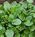 David's Garden Seeds Cress Upland D381A (Green) 500 Open Pollinated
