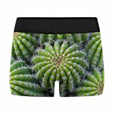 InterestPrint Custom Men's Boxer Briefs Cactus Plant XL