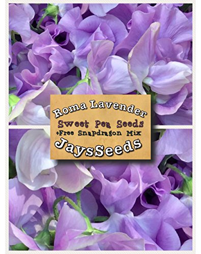 Roma Lavender Sweet Pea Certified 35 Seed UPC 600188190168 + Free Pack Mixed Snapdragons