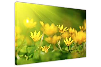 YELLOW OXALIS FLOWER FRAMED PICTURES CANVAS WALL ART PRINT FLORAL ART DECORATION