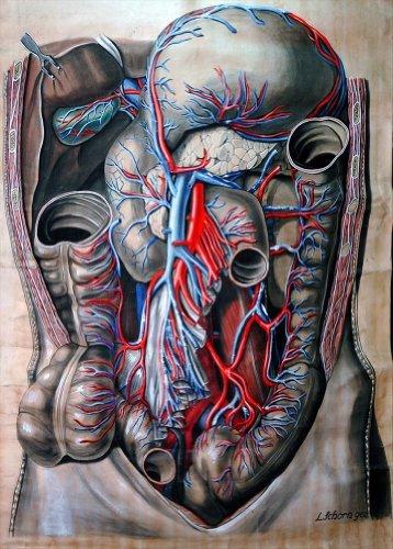 Vintage umani anatomia disegno anatomico dell' addome di Elisa Schorn C1900250gsm lucido arte della riproduzione A3poster World of Art